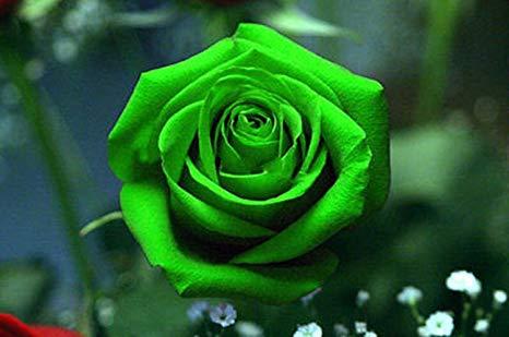 Test della rosa