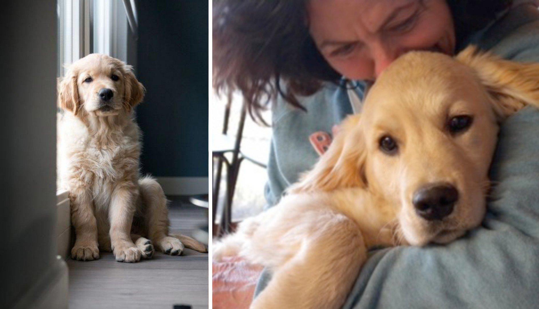 Photo of Coppia adotta un cane e fanno una terribile scoperta