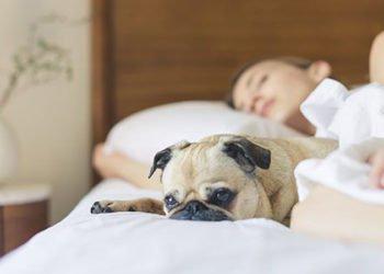 I cani aiutano il sonno delle donne parola di scienza