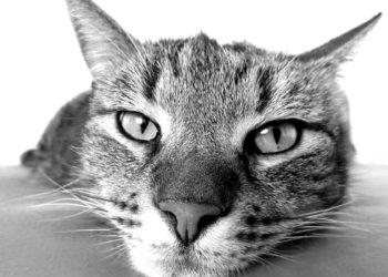 Cosa pensano i gatti dei padroni Rispondono gli esperti