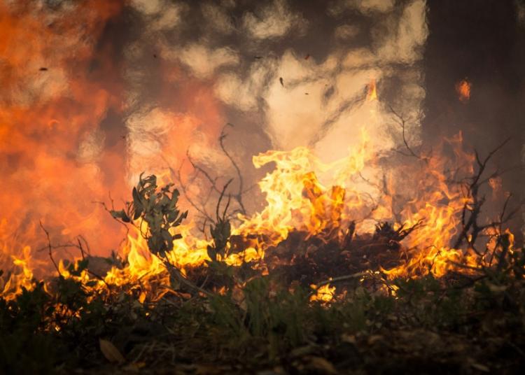 fiamme incendio paura foto free