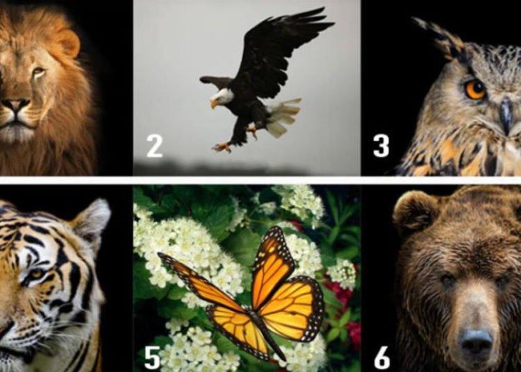 Scegli un animale e scopri qualcosa in più sulla tua personalità