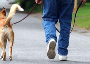 I padroni di cani rischiano più di 250 Euro di multa se non seguono queste regole